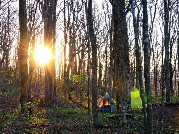 Collaborative work on Forest Service plan cost Martin his job