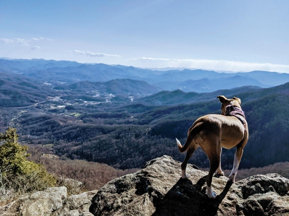 A four-legged hiker takes in the early March view from the Pinnacle. Holly Kays photo