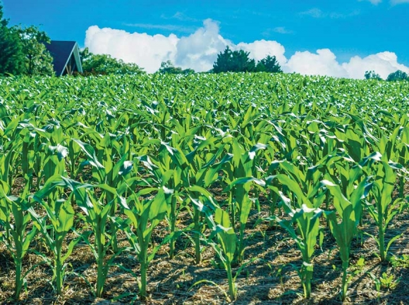 Cherokee planting method was 'agronomically sound'