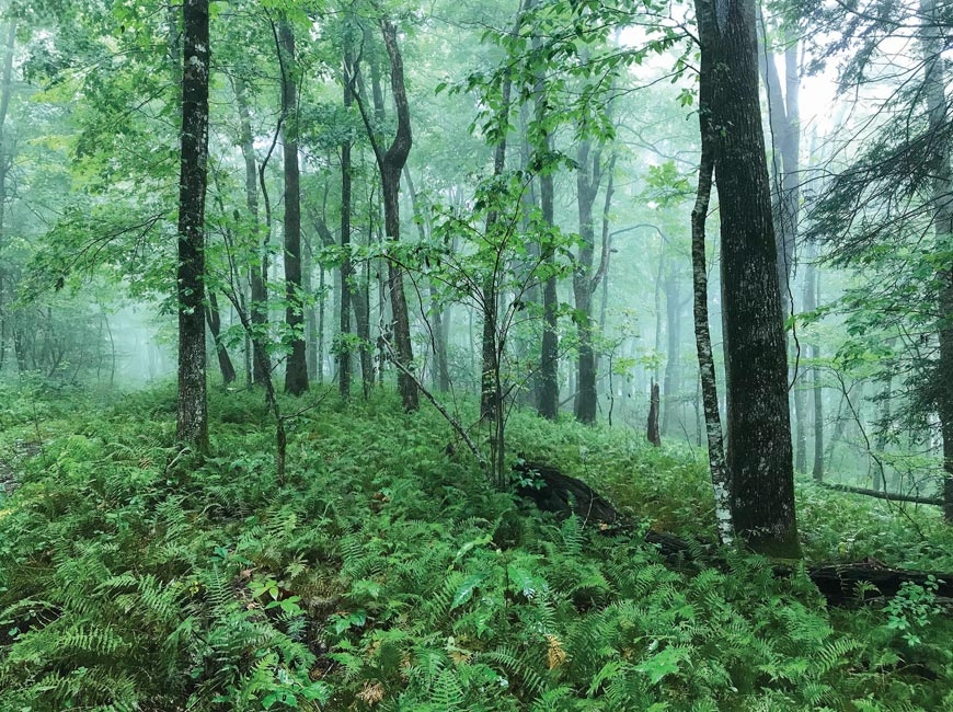 Conservation projects protect key National Forest inholdings