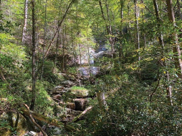 Burntfield Branch flows through the heart of a recently conserved property in Caldwell County. Foothills Conservancy photo