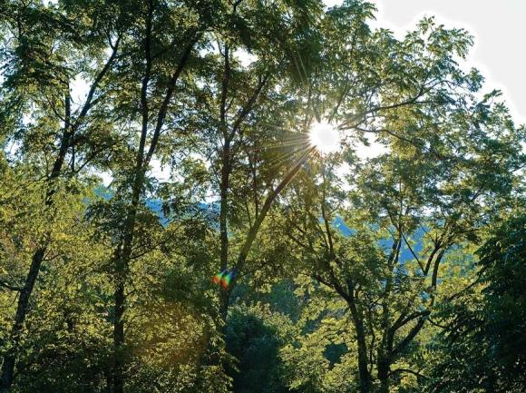 Morning sun shines through the trees upslope from Judaculla Rock. Holly Kays photos