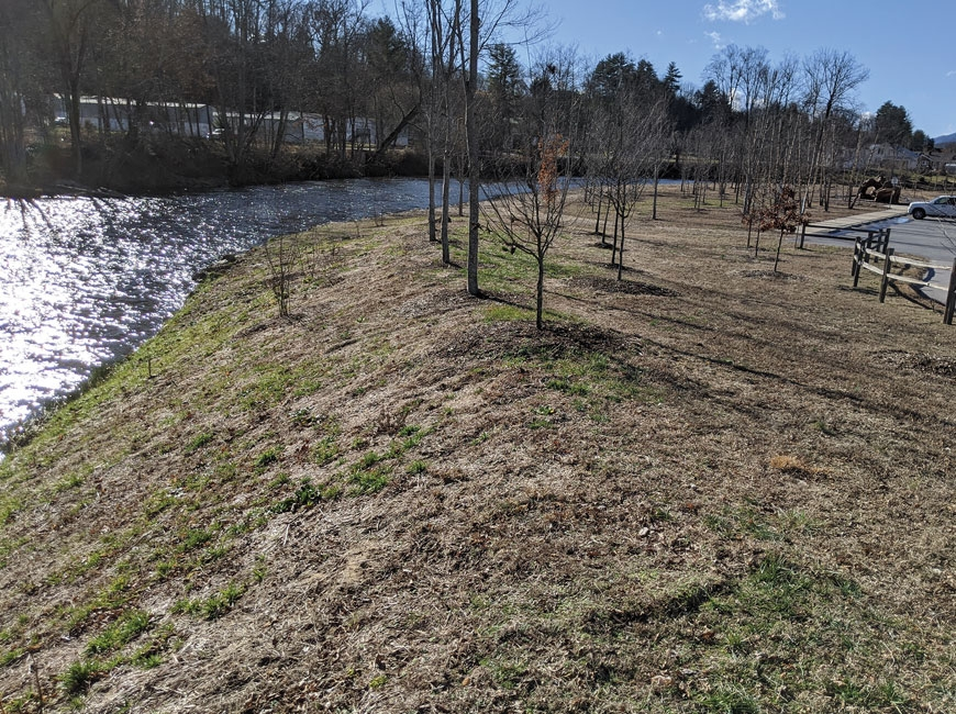 The rivercane will help stabilize the soil at Rivers Edge Park, where flooding is frequent. Donated photo