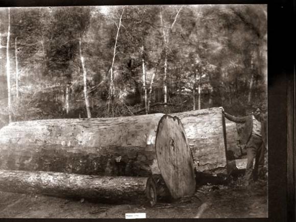Logging has always been dangerous work