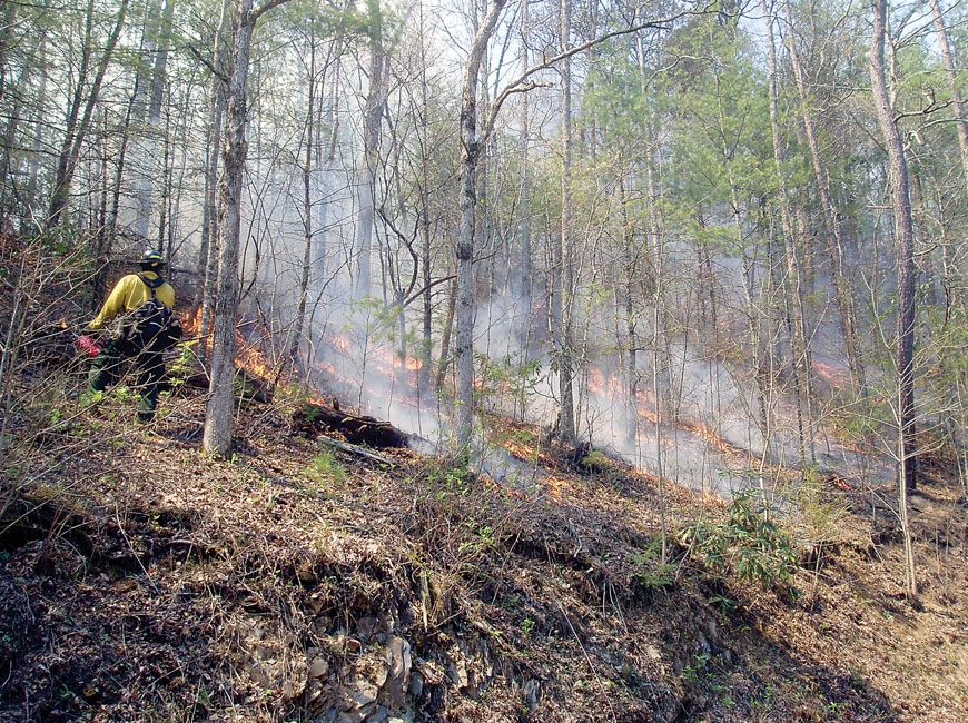 Firefighters conduct a prescribed burn on the area in 2009. NPS photo