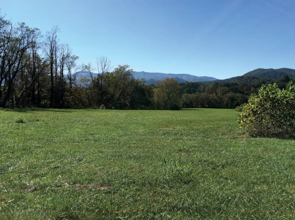Currently planted as a fescue hayfield, the land borders the Little Tennessee River and could be restored as important early successional habitat. Donated photo