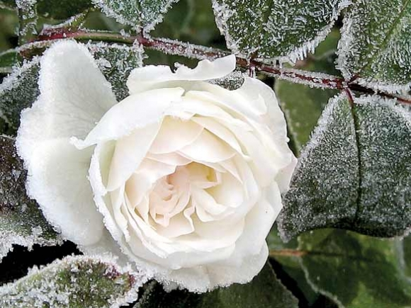 When frost comes, we know winter has arrived