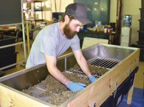 Noah Miller, assistant farmer manager, separates hemp buds through a sifter at Appalachian Growers. Jessi Stone photo