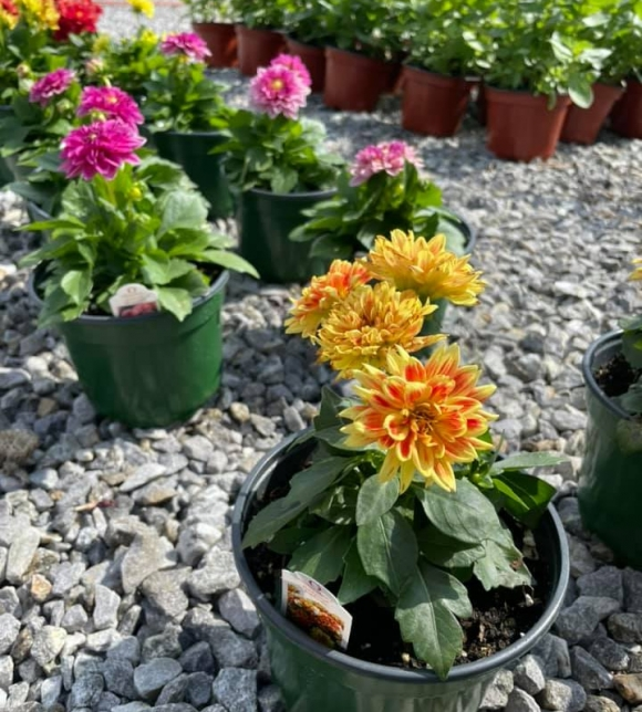Tips & Suggestions From Your Local Nursery