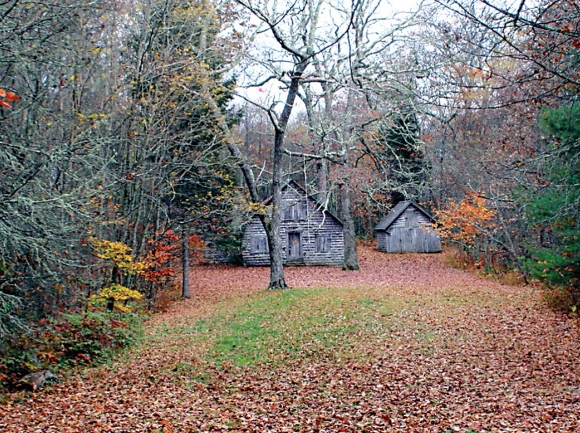 Repairs proposed for Wilson Lick cabin