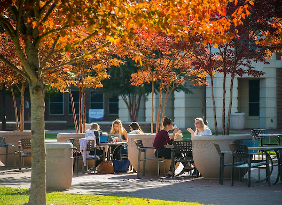 Western Carolina University students gather beneath autumn leaves. WCU photo