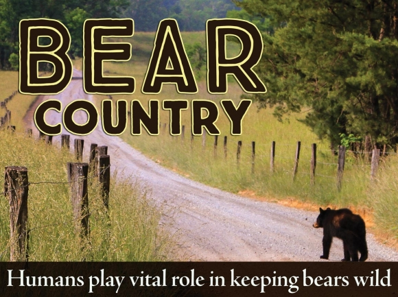 Living in bearadise: Encounters highlight need for human responsibility in bear country